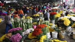 Minagri admite producción y comercialización de flores de cara a la celebracion del Día de la Madre