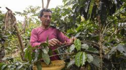 Minagri inició encuesta a productores cafetaleros