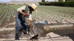 Minagri invertirá S/ 2.511 millones para la reactivación del agro