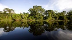 Minagri, Minam y Cooperación Japonesa desarrollan acciones de conservación de los bosques