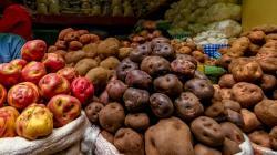 Minagri: Perú se mantiene como primer productor de papa en América Latina con 5.3 millones de toneladas en 2019