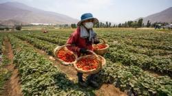 Minagri promueve desarrollo de hoja de ruta para impulsar migración a la economía circular