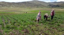 Minagri reconoce a Parque de la Papa en Cusco como zona de agrobiodiversidad