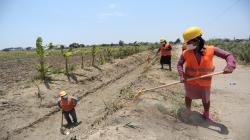 Minagri supervisa mantenimiento de canales de riego y drenes en Lambayeque