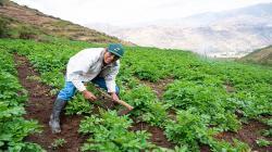 Minagri y Conveagro acuerdan modificar norma para que crédito de fondo Agroperú llegue a pequeños productores