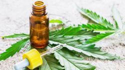 Mininter aprobó lineamientos para producción y comercialización de cannabis para uso medicinal