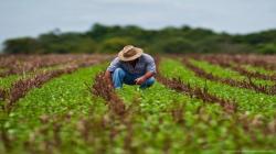 Ministro Tenorio: Política Nacional Agraria prevé acceso financiero a los productores de subsistencia