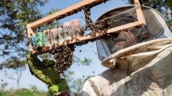 Muerte de abejas en Brasil es un mensaje para la humanidad