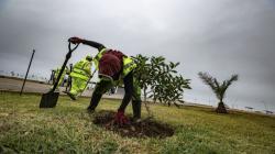 Municipalidad de Lima sembró 1.700 árboles, 60 mil flores e implementó 17.000 m² de áreas verdes de la ciudad