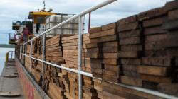Nueva medida para exportar cedro exige declarar stock hasta el 28 de agosto