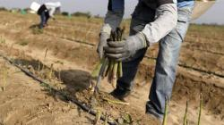 OCDE pide cambiar los subsidios agrícolas para aumentar su eficacia