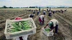 OIT recomienda que empresas agroexportadoras incrementen aporte a EsSalud de 4% a 9%