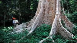 Osinfor mejora sistema de información para una mejor gestión forestal y en fauna silvestre