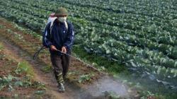 Países son más estrictos con manejo de residuos de pesticidas