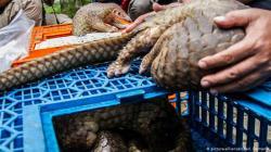 Pandemias pueden surgir por nuestro comportamiento con los animales