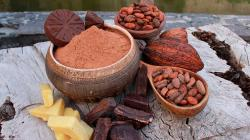 Pasco: Construirán planta procesadora de cacao en Constitución