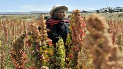 PBI Agropecuario creció 2.1% en el primer semestre del año