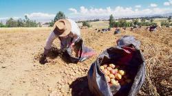 Pequeños agricultores perdieron más de S/ 6.000 millones por la pandemia