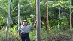 Pequeños productores agroforestales de San Martín son los primeros en obtener una certificación de Cadena de Custodia de FSC