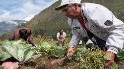 Pequeños productores agropecuarios son prioridad en Reglamento de Certificación y Fiscalización de la Producción Orgánica