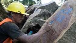 Perú contará con sistema de información en línea que permitirá acreditar origen legal de la madera