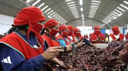 Perú exportó páprika entera por US$ 34 millones entre enero y mayo de este año