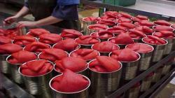 Perú exportó pimiento piquillo en conserva por US$ 8.6 millones durante el primer semestre de 2021