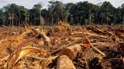 Perú fue el quinto país más deforestado a nivel mundial en 2019
