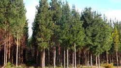 Perú ocupa el noveno lugar en mayor superficie boscosa del mundo