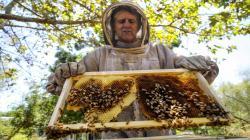 Perú produce 2.314 toneladas de miel de abeja anualmente