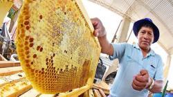 Perú produce más de 2.300 toneladas de miel al año