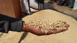 Perú tiene potencial para convertirse en proveedor de semillas de calidad para el mercado interno y externo
