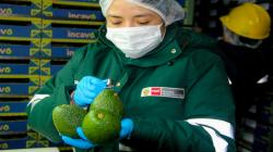Perú y Chile inician certificación electrónica para facilitar el comercio de productos agrícolas