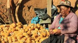 Pichos: el pueblo que prefirió alimentarse solo de maíz para evitar contagios de Covid-19