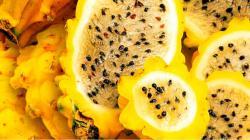 Pitahaya ahora podrá ser cultivada en los valles andinos