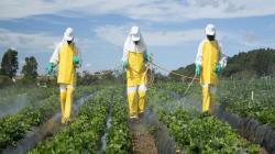 Plaguicidas químicos evitan pérdidas anuales de entre 30 y 40% de las cosechas mundiales