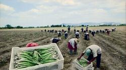 Pleno del Congreso aprobó ampliar por 10 años la vigencia de la Ley de Promoción Agraria