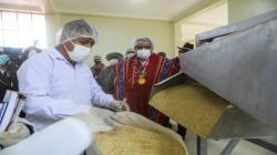 Ponen en marcha procesadora de quinua en Puno
