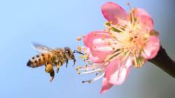¿Por qué sería una catástrofe que desaparecieran las abejas y qué puedes hacer tú para evitarlo?