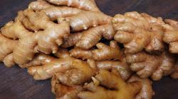 Potencial comercial del kion orgánico enriquece la canasta exportadora peruana