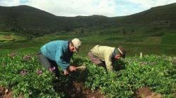 Potenciar la agricultura familiar