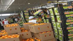 Problemas logísticos siguen liderando las limitaciones del sector agroexportador