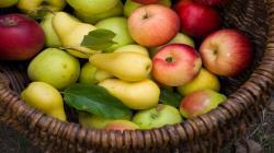 Producción de manzanas del hemisferio sur alcanzarían las 5.1 millones de toneladas este año, lo que representaría un incremento de 6%