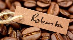 Producción mundial de café Robusta crece aceleradamente