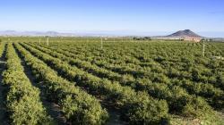 Producción mundial de limón alcanzó las 6.467.616 toneladas en 2020