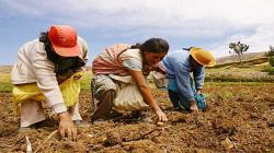 Producción nacional agropecuaria creció 2% entre enero-mayo de este año a pesar del Covid-19