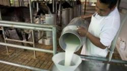 Producción nacional de leche fresca alcanzó las 1.9 millones de toneladas en 2020