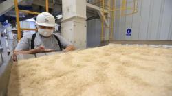 Productores de Apurímac abastecerán con 22 toneladas de quinua orgánica el mercado europeo