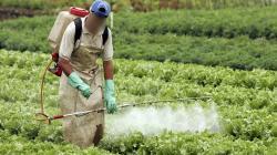 Prohíben importación, fabricación, registro, distribución, comercialización, almacenamiento y envasado de plaguicidas agrícolas que contengan Forato