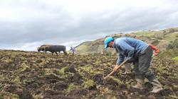 Promulgan Ley 31075 que oficializa creación del Ministerio de Desarrollo Agrario y Riego